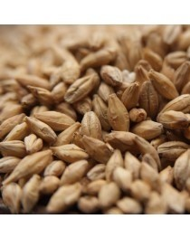 Organic Pilsner Malt 25kg